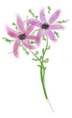 dessin_bouquet-2