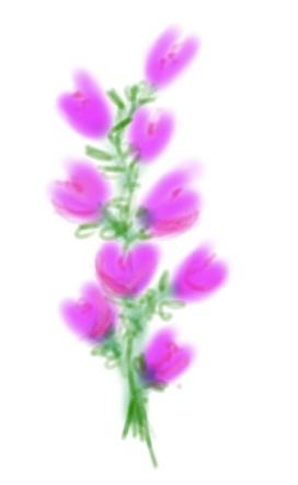 dessin_bouquet-9