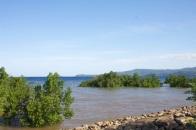 mangrove à marée haute