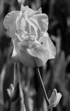 photo-portrait_d_Iris-13
