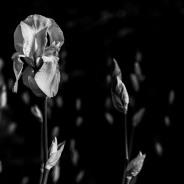photo-portrait_d_Iris-15
