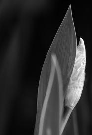 photo-portrait_d_Iris-2