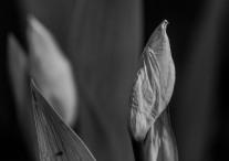 photo-portrait_d_Iris-5