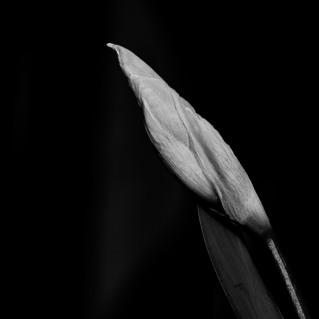 photo-portrait_d_Iris-6