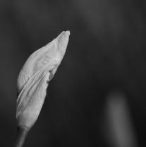 photo-portrait_d_Iris-7